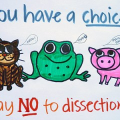 Humane Alternatives to Dissection
