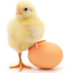 Egg Yolk Substitute