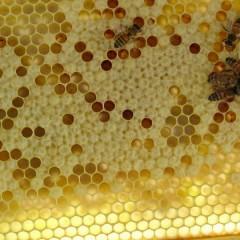 Beeswax – Is It Vegan?