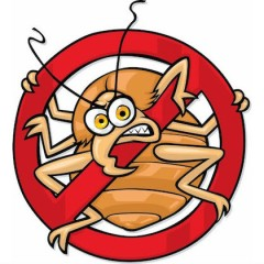 Vegans, Insects and Rodents